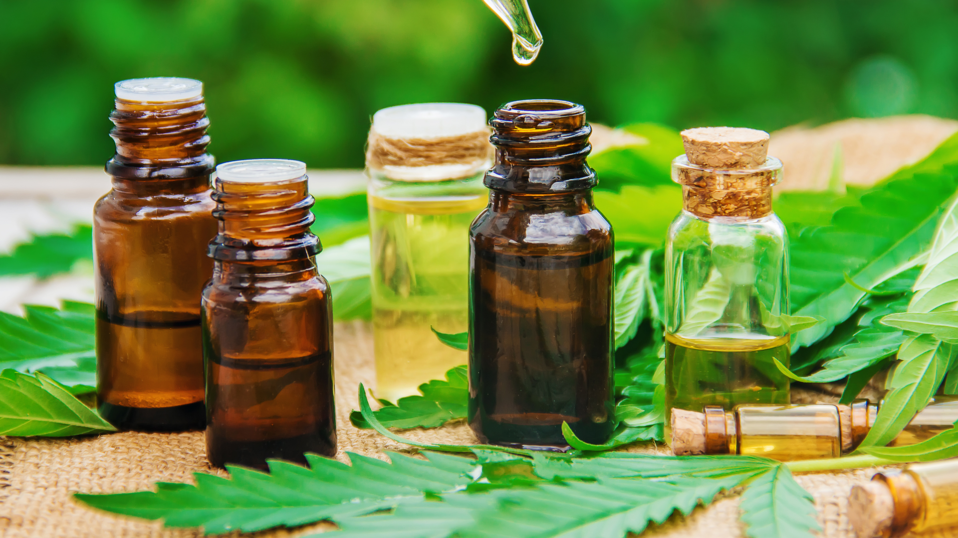 CBD oil (CBD Öl) acts in the body as an antipsychotic and is a neuroprotective element