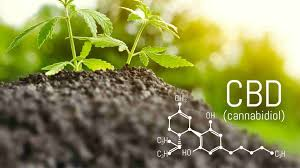 What to know about CBD effects